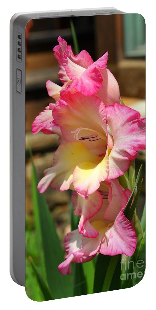 Gladiola Portable Battery Charger featuring the photograph Tickled Pink by Christina McKinney