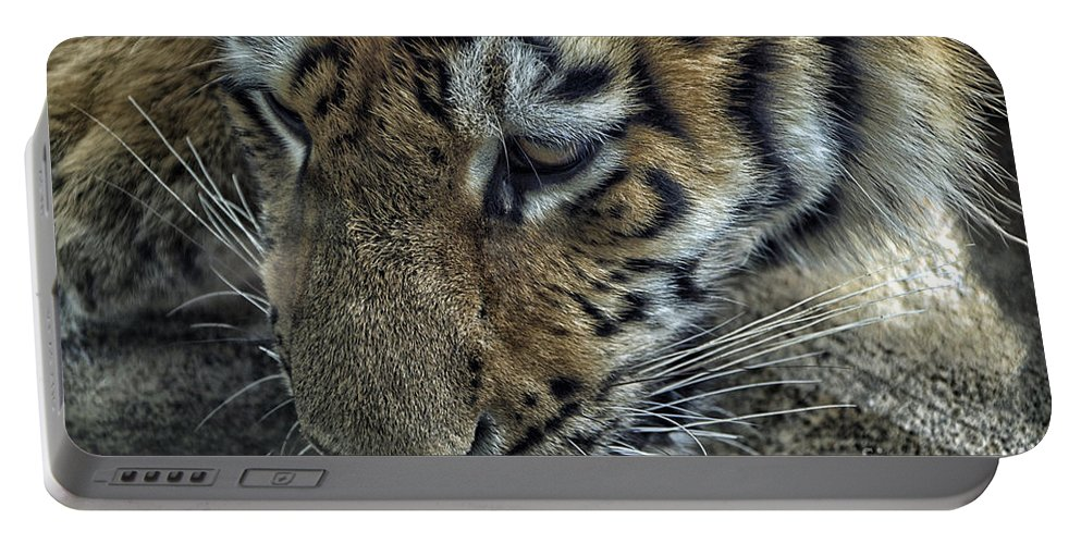 Animals Portable Battery Charger featuring the photograph Tiger Drinking by Thomas Woolworth