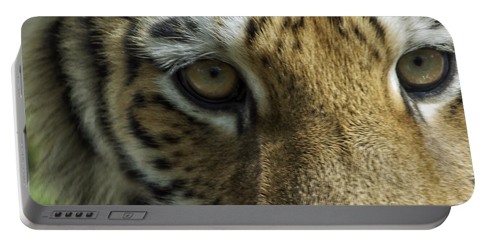 Animals Portable Battery Charger featuring the photograph Tiger Eyes by Thomas Woolworth