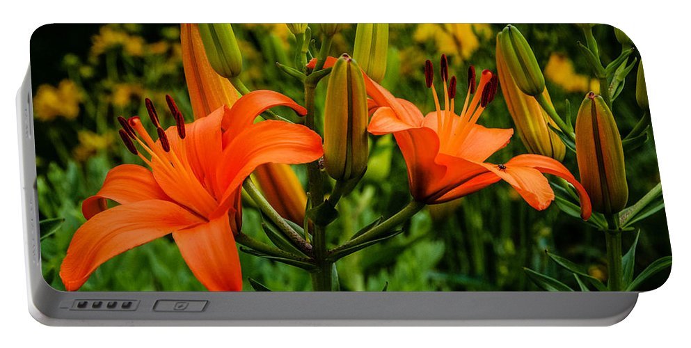Tiger Lily Portable Battery Charger featuring the photograph Tiger Lily Blossoms by Grace Grogan