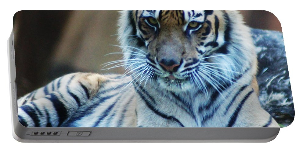 Tiger Portable Battery Charger featuring the photograph Tiger Posing by Ben Yassa
