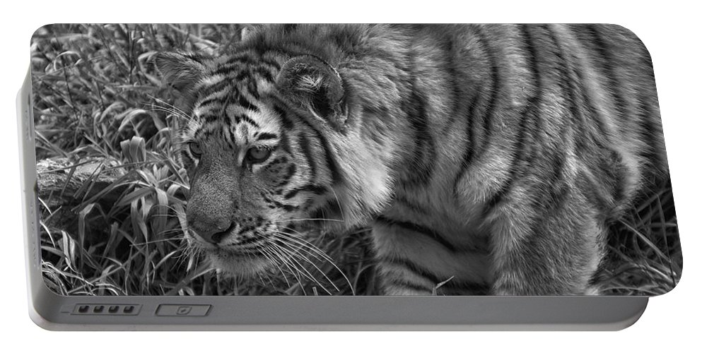 Animals Portable Battery Charger featuring the photograph Tiger Stalking In Black And White by Thomas Woolworth