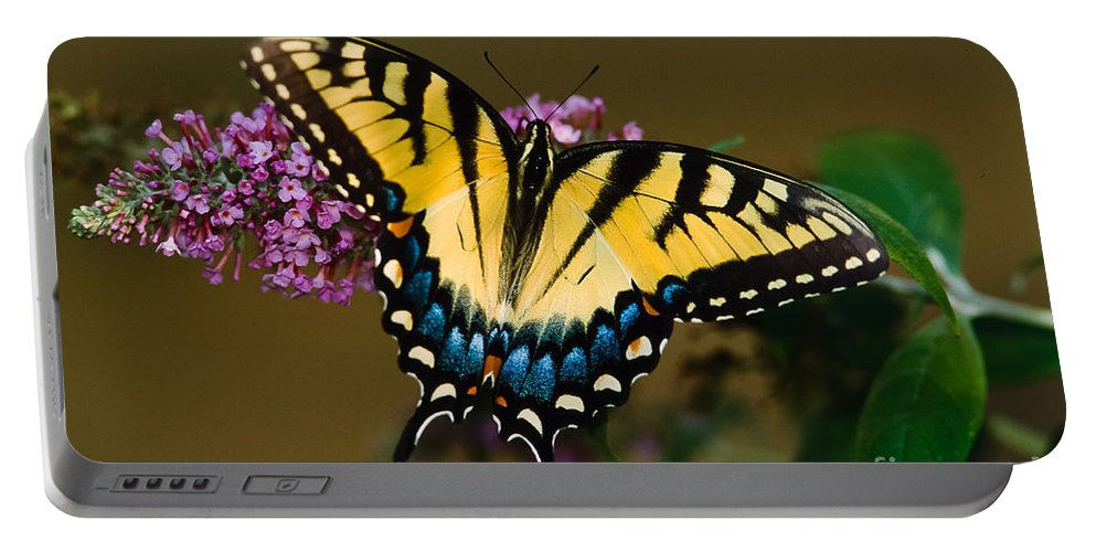 Tiger Swallowtail Portable Battery Charger featuring the photograph Tiger Swallowtail Butterfly by Joe Elliott