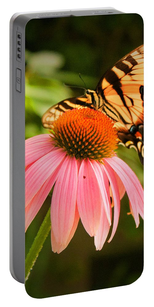 Tiger Swallowtail Butterfly Portable Battery Charger featuring the photograph Tiger Swallowtail Feeding by Michael Porchik