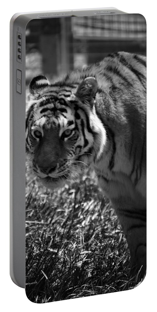 Animals Portable Battery Charger featuring the photograph Tiger With A Cold Stare by Thomas Woolworth