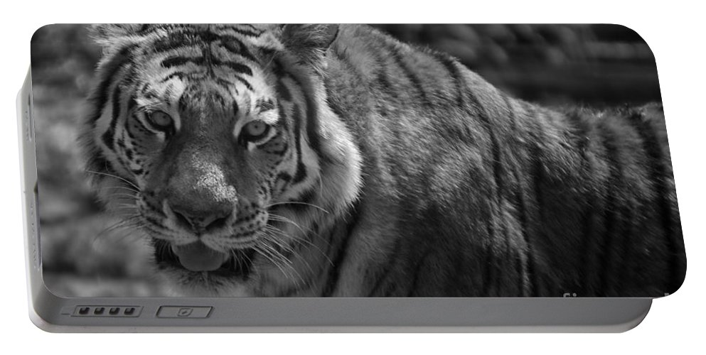 Animals Portable Battery Charger featuring the photograph Tiger With A Fixed Stare by Thomas Woolworth