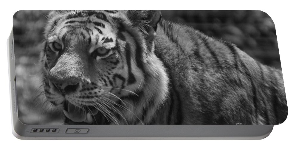 Animals Portable Battery Charger featuring the photograph Tiger With A Hard Stare by Thomas Woolworth
