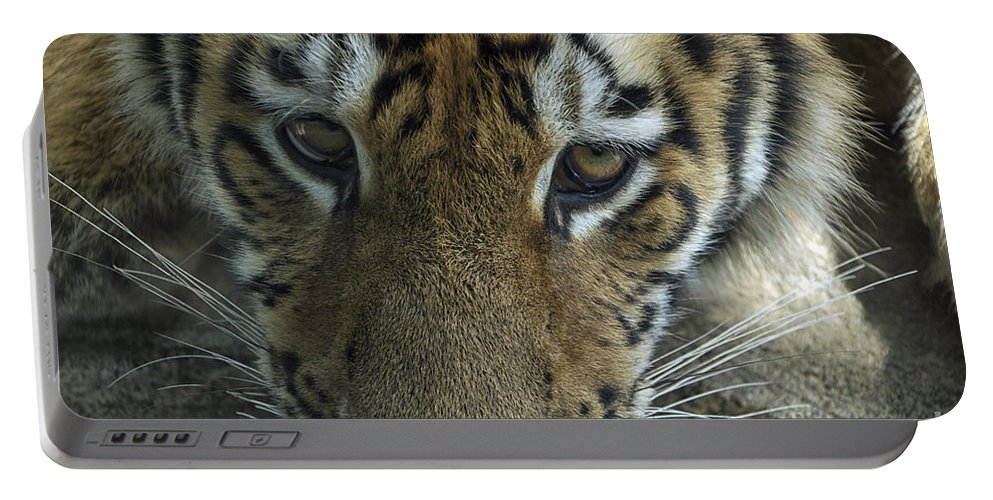Animals Portable Battery Charger featuring the photograph Tiger You Looking At Me by Thomas Woolworth