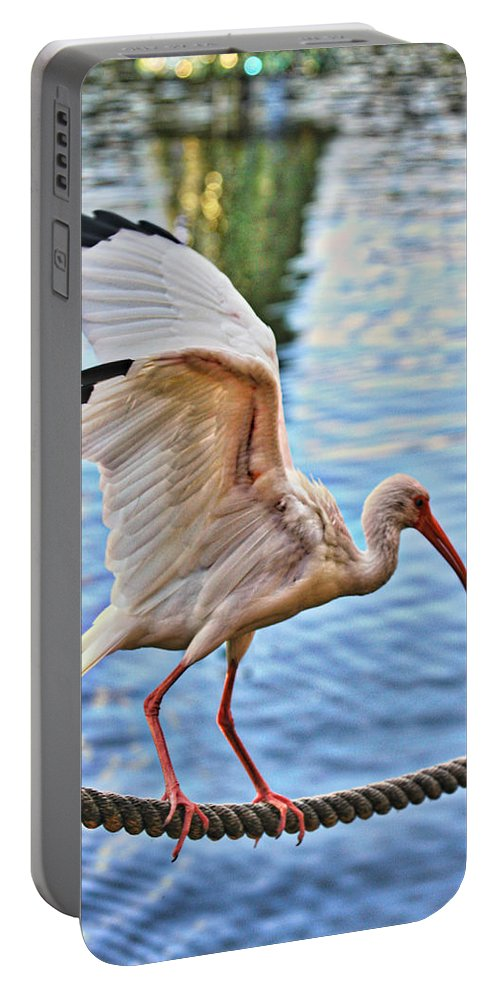Bird Portable Battery Charger featuring the photograph Tightrope Walking Ibis by Alice Gipson
