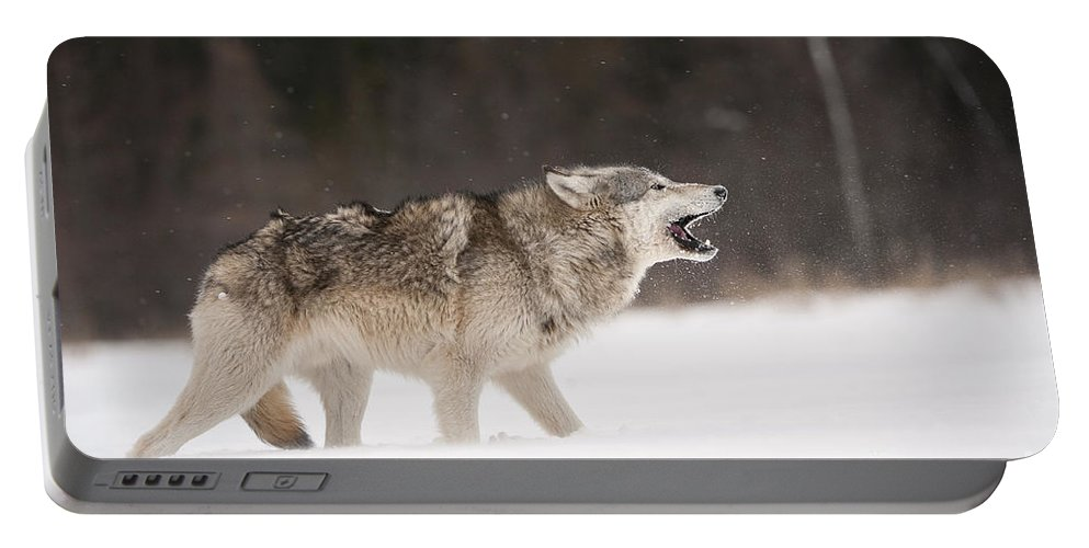 Canis Lupus Portable Battery Charger featuring the photograph Timber Wolf by John Shaw