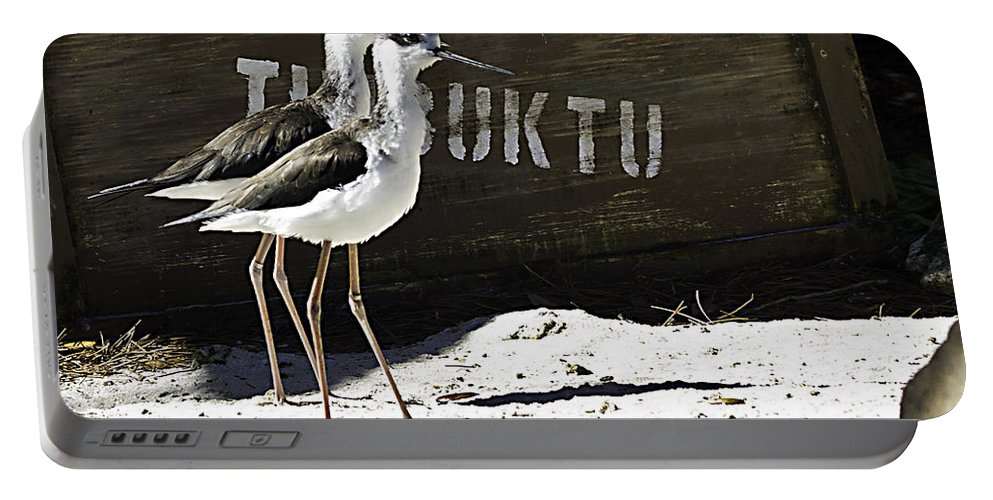 Birds Portable Battery Charger featuring the photograph Timbuktu Two by Ken Frischkorn