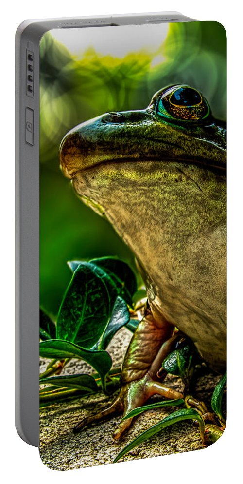 Frog Portable Battery Charger featuring the photograph Time Spent With The Frog by Bob Orsillo