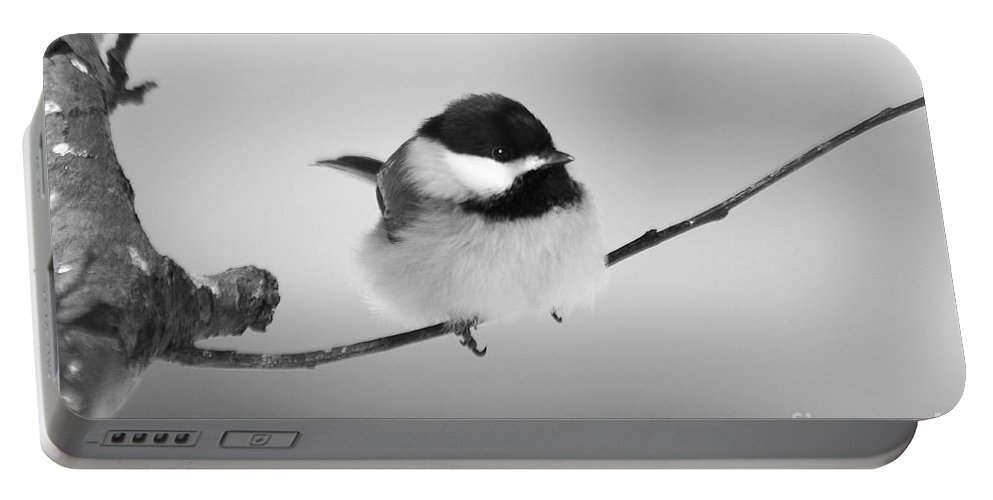 Bird Portable Battery Charger featuring the photograph Tiny Branch With Guest by Deborah Benoit