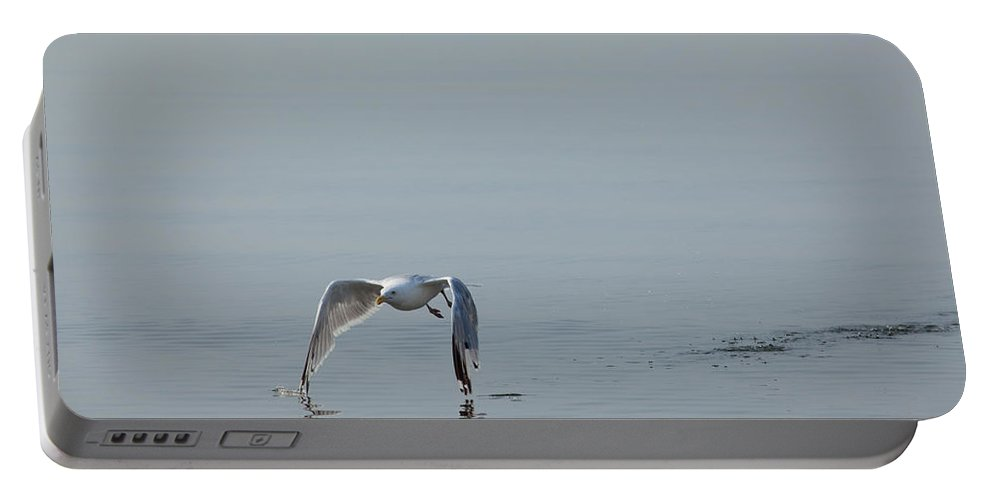 Gull Portable Battery Charger featuring the photograph Tips Touching by Karol Livote