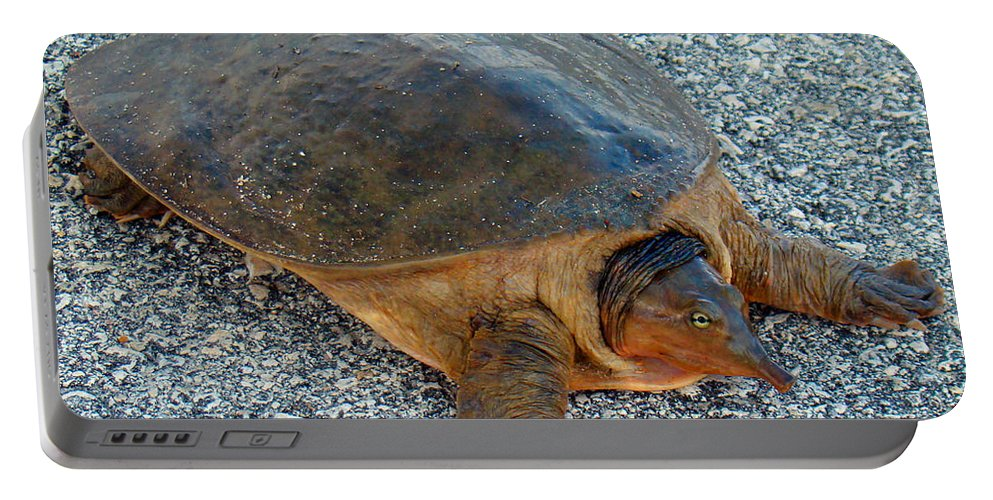 Turtle Portable Battery Charger featuring the photograph Tired Turtle by Nancy L Marshall
