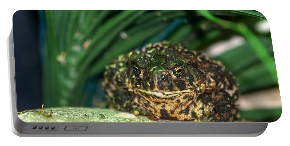 Portable Battery Charger featuring the photograph Toad by Optical Playground By MP Ray