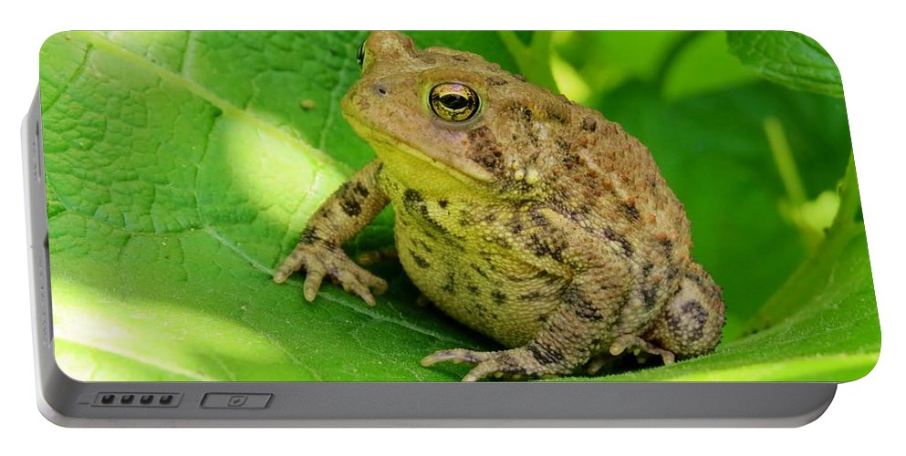 Nature Portable Battery Charger featuring the photograph Toad Sitting by Art Dingo