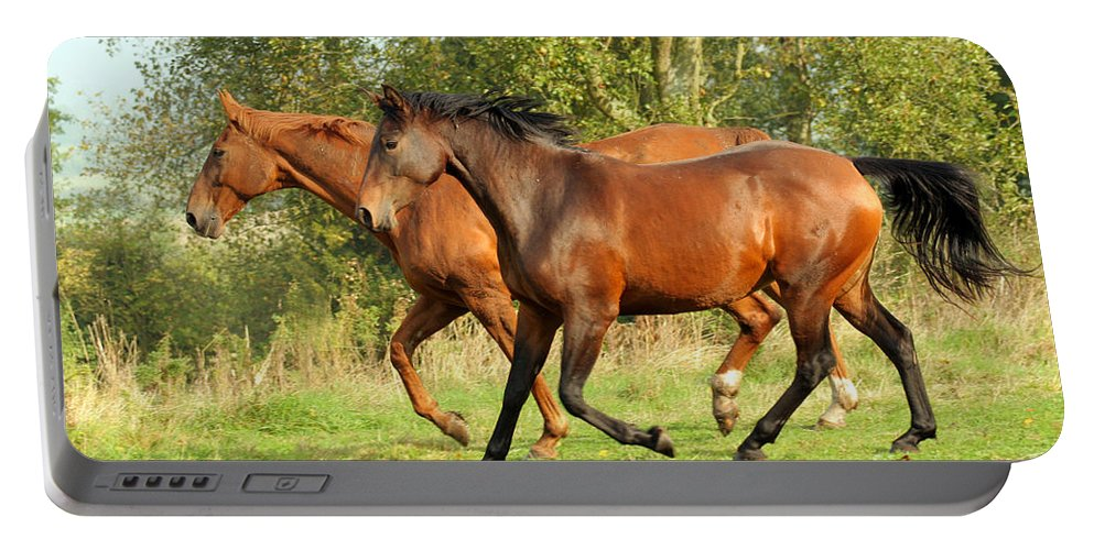 Horse Portable Battery Charger featuring the photograph Together Now by Angel Ciesniarska