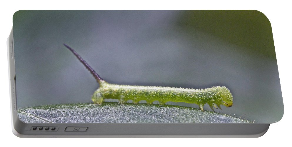 Tomato Hornworm Portable Battery Charger featuring the photograph Tomato Hornworm - Manduca Quinquemaculata - Five Spotted Hawkmoth by Mother Nature