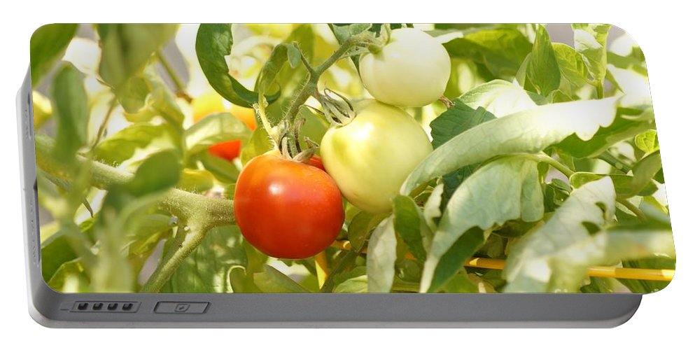 Agriculture Portable Battery Charger featuring the photograph Tomatoes On The Vine by Kerri Mortenson