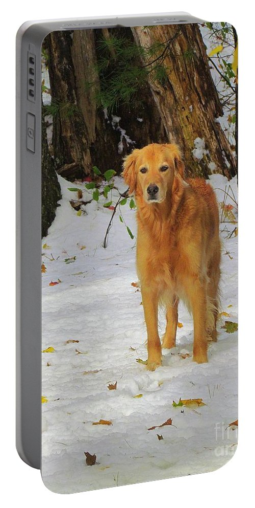 Golden Retriever Portable Battery Charger featuring the photograph Too Early For Snow Mama by Elizabeth Dow