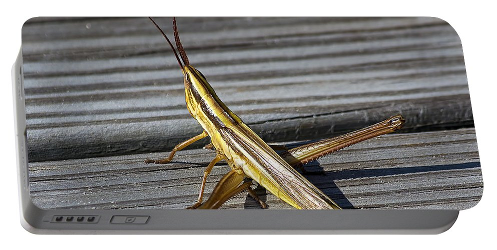 Wildlife Portable Battery Charger featuring the photograph Toothpick Grasshopper by Kenneth Albin
