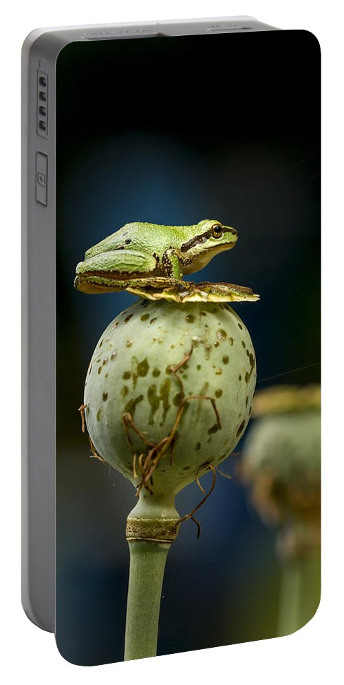 Amphibian Portable Battery Charger featuring the photograph Topper by Jean Noren