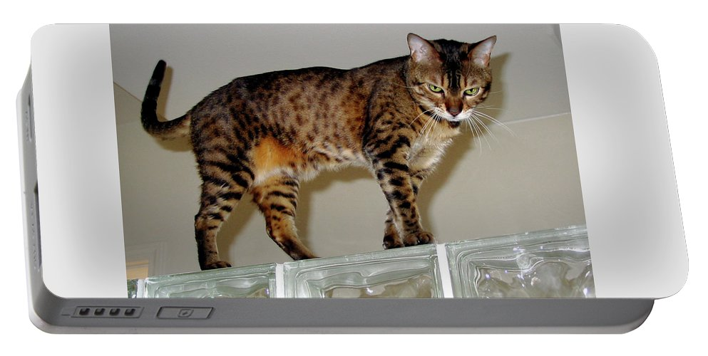 Bengal Cat Portable Battery Charger featuring the photograph Tora On Glass II by Phyllis Kaltenbach