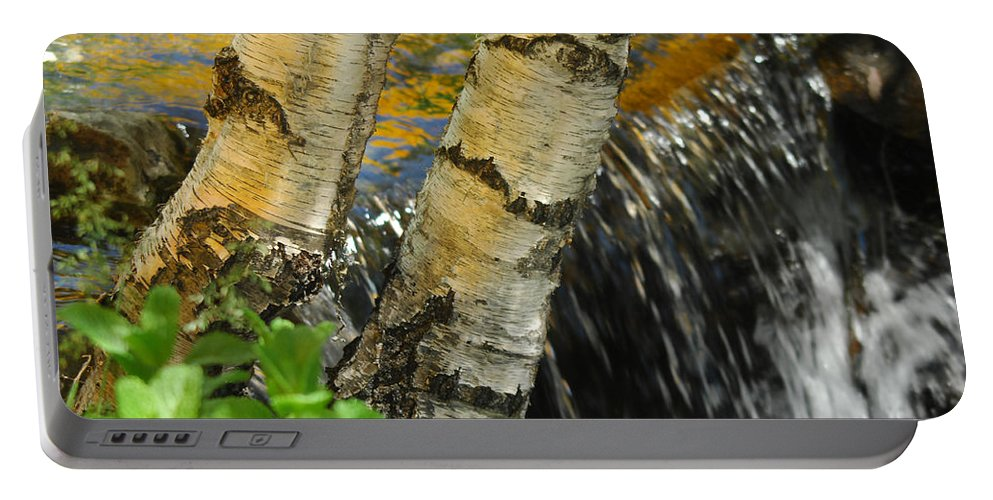 Birch Trees Portable Battery Charger featuring the photograph Totally Birching by Donna Blackhall