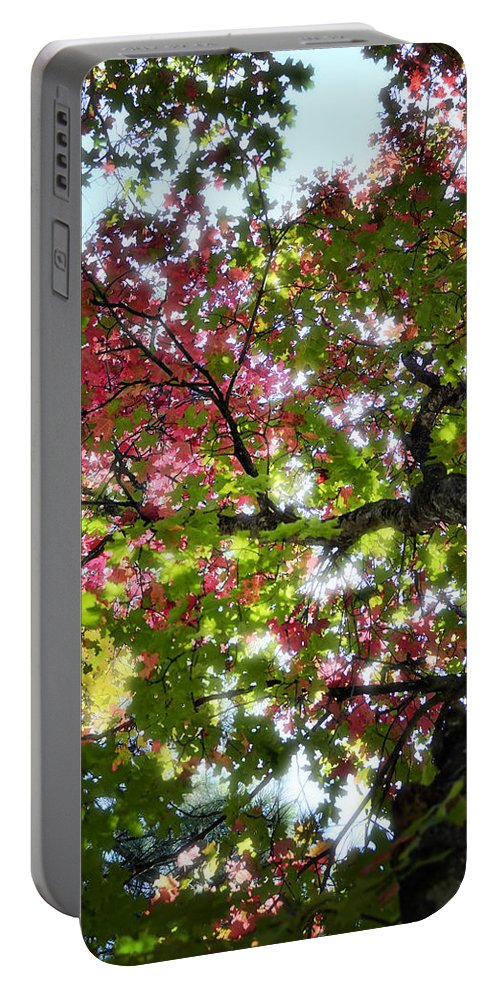 Tree Portable Battery Charger featuring the photograph Touches Of Autumn by Saija Lehtonen