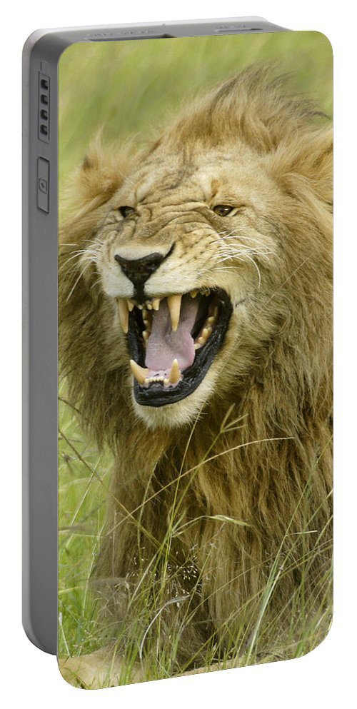 Africa Portable Battery Charger featuring the photograph Tough Guy by Michele Burgess