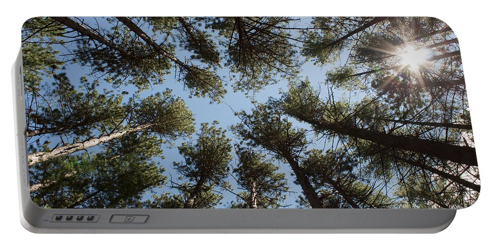 White Pine Portable Battery Charger featuring the photograph Towering White Pines by Barbara McMahon