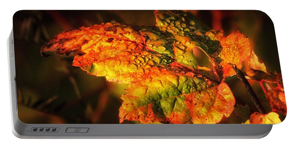 Autumn Leaf.changing Leaf Portable Battery Charger featuring the photograph Transitioning by Susan Capuano