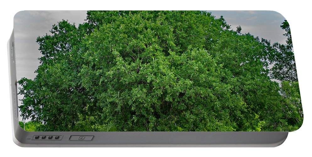 Tree Portable Battery Charger featuring the photograph Tree In Nature by Gary Richards