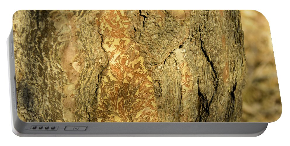 Usa Portable Battery Charger featuring the photograph Tree Self Reflections In Bark by LeeAnn McLaneGoetz McLaneGoetzStudioLLCcom