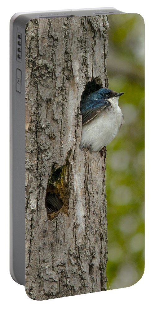 Tree Portable Battery Charger featuring the photograph Tree Swallow by Jayne Gohr