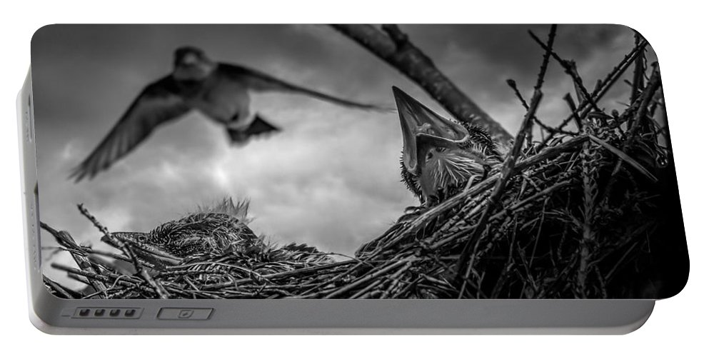 Swallow Portable Battery Charger featuring the photograph Tree Swallows In Nest by Bob Orsillo