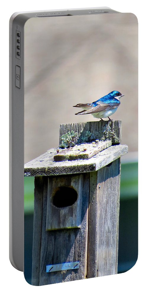 Tree Portable Battery Charger featuring the photograph Tree Swallows by Art Dingo