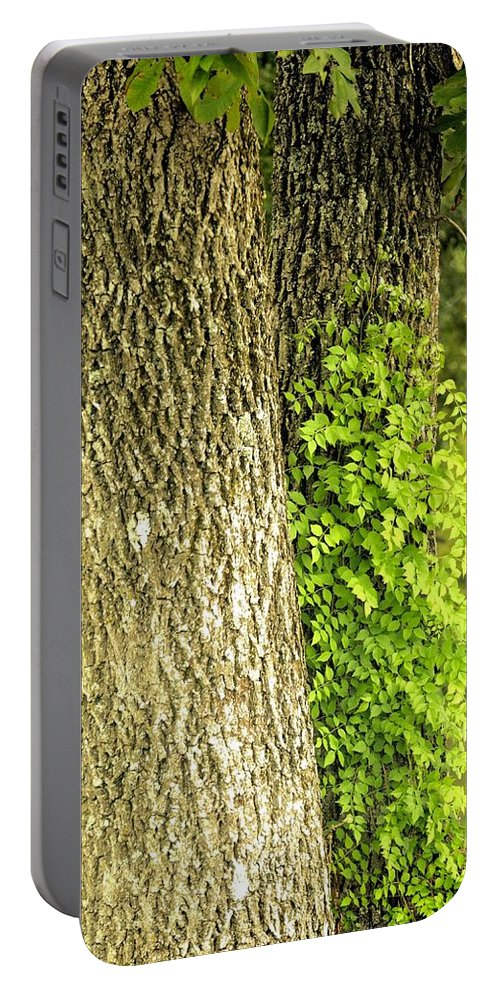 Trees At My Window Portable Battery Charger featuring the photograph Trees At My Window by Maria Urso