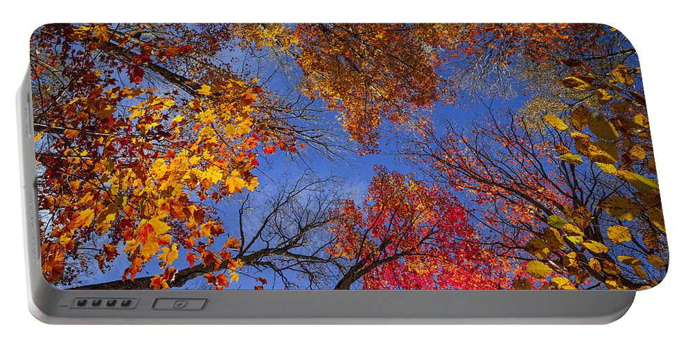 Fall Portable Battery Charger featuring the photograph Treetops In Fall Forest by Elena Elisseeva