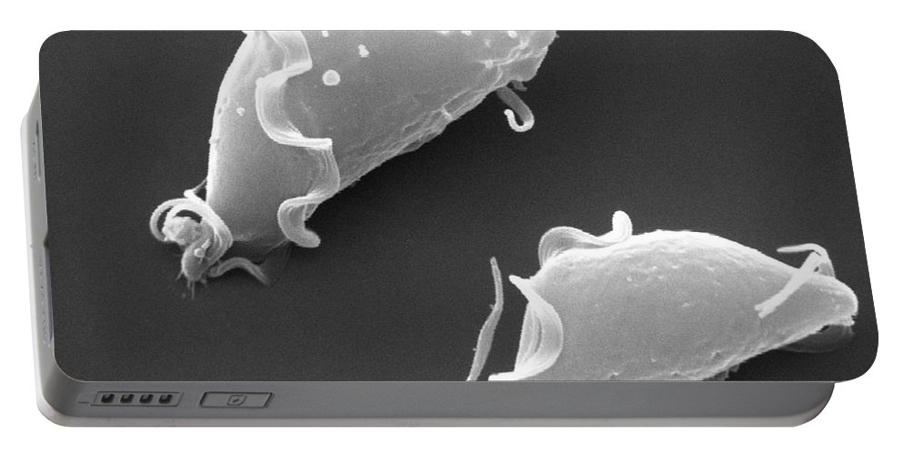 Trichomonas Vaginalis Portable Battery Charger featuring the photograph Trichomonas Vaginalis Sem X8,500 by David M. Phillips