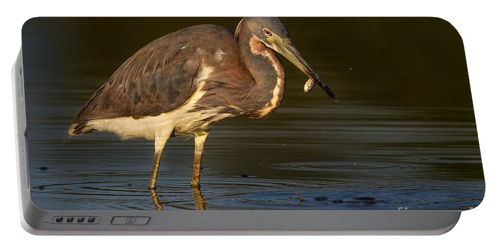 Bird Portable Battery Charger featuring the photograph Tricolored Heron With Fish by Jerry Fornarotto