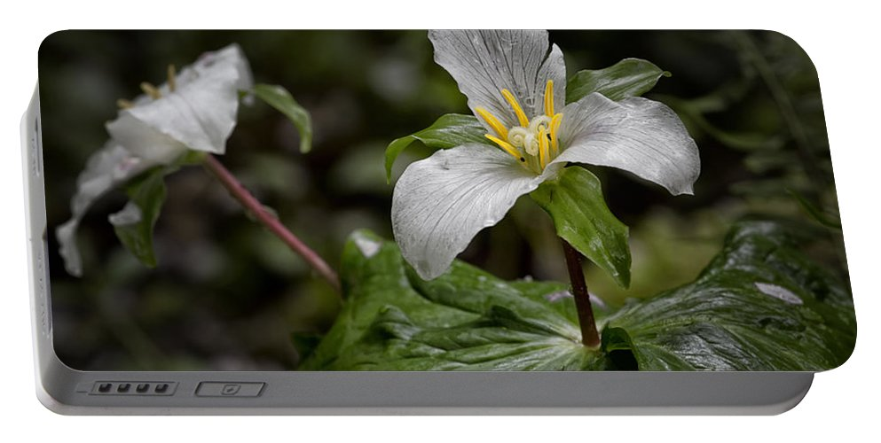 Trillium Portable Battery Charger featuring the photograph Trillium - After The Rain by Belinda Greb