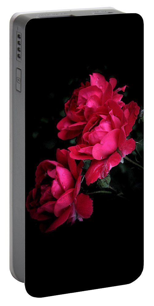 Rose Portable Battery Charger featuring the photograph Triple Rose by Susan McMenamin