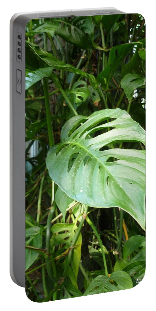 Vivid Portable Battery Charger featuring the photograph Tropical Green Foliage by Lingfai Leung