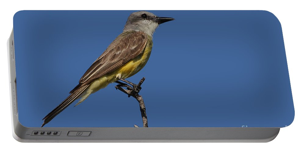 Tropical Kingbird Portable Battery Charger featuring the photograph Tropical Kingbird by Meg Rousher