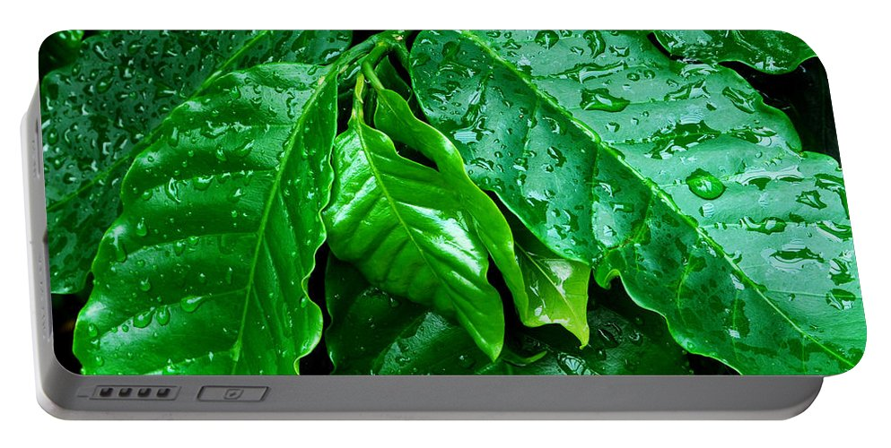 Water Portable Battery Charger featuring the photograph Tropical Leaves With Water drops by Nancy Mueller