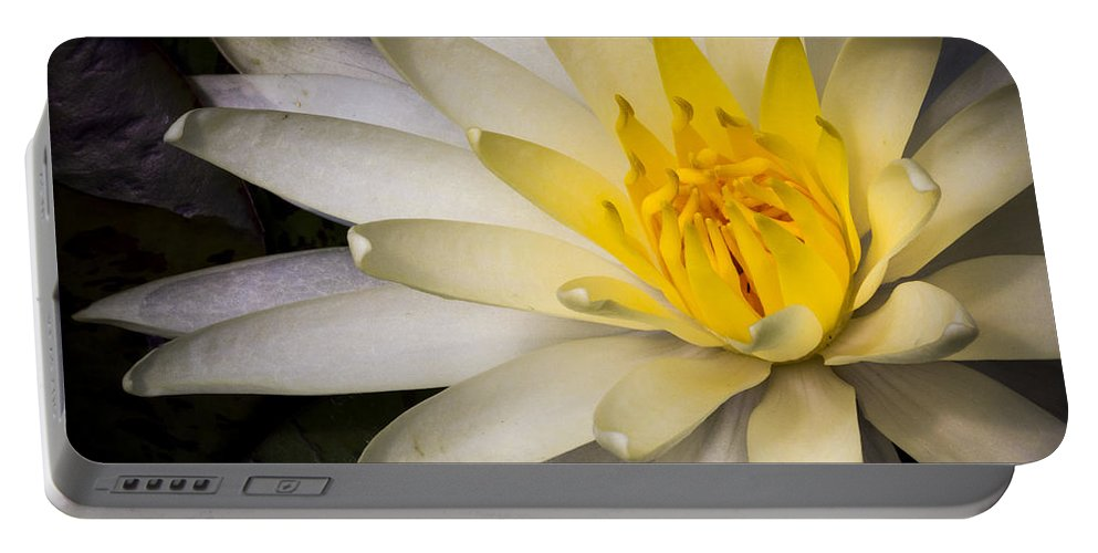 Water Portable Battery Charger featuring the photograph Tropical White Water Lily by Jean Noren