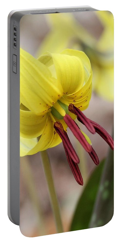 Trout Lily Portable Battery Charger featuring the photograph Trout Lily Or Dog-toothed Violet by Doris Potter