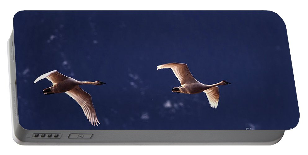 Trumpeter Swans Portable Battery Charger featuring the photograph Trumpeter Swans In-flight by Sharon Talson